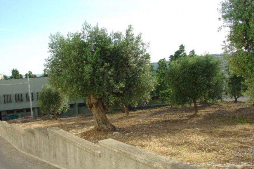Vendita Casolari e lamie – Via Liguria, Valle D'Itria – Alto Salento, Cisternino (Brindisi)