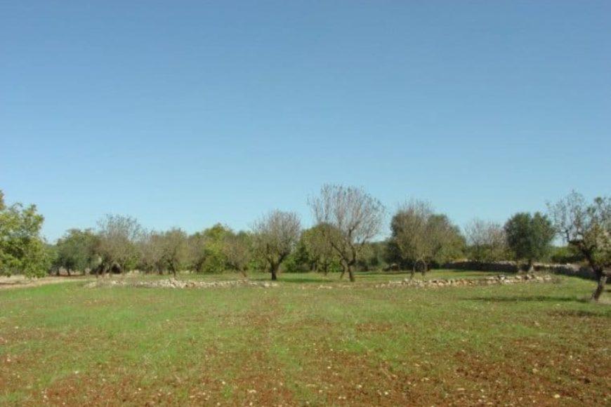 Vendita terreno – Contrada Lamianuova, Valle D'Itria – Alto Salento, Ceglie Messapica (Brindisi)