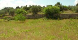 Vendita Casolari e lamie – Contrada Bruno, Valle D'Itria – Alto Salento, Cisternino (Brindisi)
