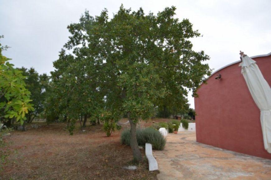 Vendita Trulli abitabili – Contrada Recupero, Valle D'itria – Alto Salento, Ceglie Messapica (Brindisi)