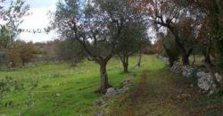 Vendita terreno – Contrada Ulmo – Le Monache, Valle D'Itria, Ceglie Messapica (Brindisi)