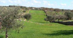 Vendita terreno – Contrada Giovanni Fasano , Valle D'Itria , Ostuni (Brindisi)