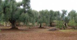 Vendita terreno – Contrada Bax, Francavilla Fontana (Brindisi)
