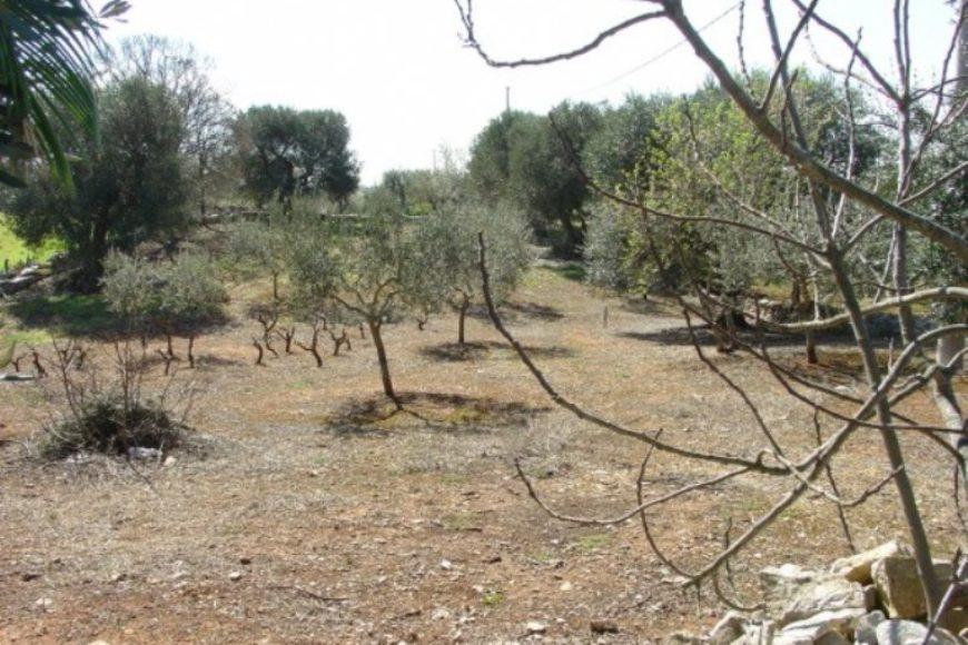 Vendita terreno – Contrada Montetesse, Locorotondo (Bari)