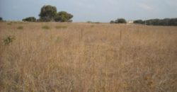 Vendita terreno – Localita' Gorgognolo, Alto Salento, Ostuni (Brindisi)