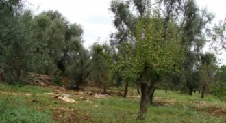Vendita terreno – Contrada Palmarino , Francavilla Fontana (Brindisi)