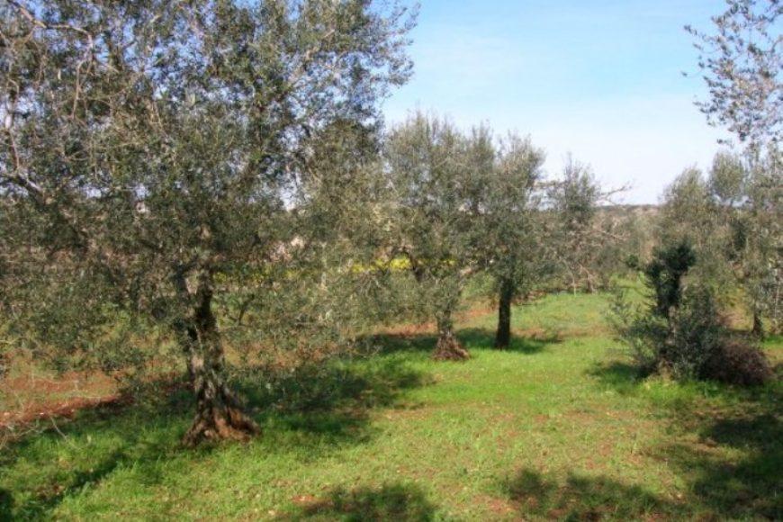 Vendita terreno – Contrada San Galare, Ostuni (Brindisi)