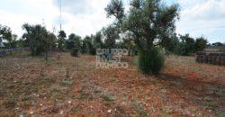 Vendita Trulli e lamie rustici – Contrada San Leonardo, Cisternino (Brindisi)