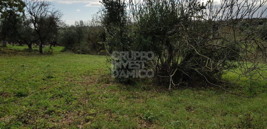 Vendita terreno – Contrada Chiobbica, Cisternino (Brindisi)