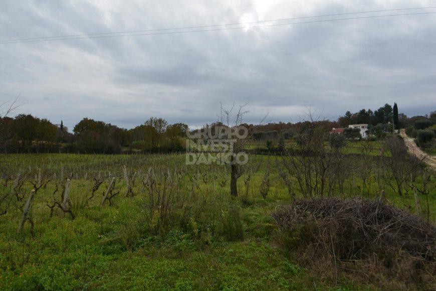 Vendita trulli e lamie rustici – Contrada Selvaggi, Ceglie Messapica (Brindisi)