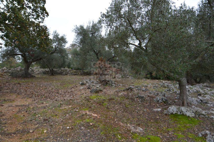Vendita terreno – Contrada Chiobbica, Ostuni (Brindisi)