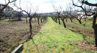 Vendita terreno – Contrada Carparo, Cisternino (Brindisi)