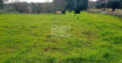Vendita terreno – Contrada Panza, Cisternino (Brindisi)