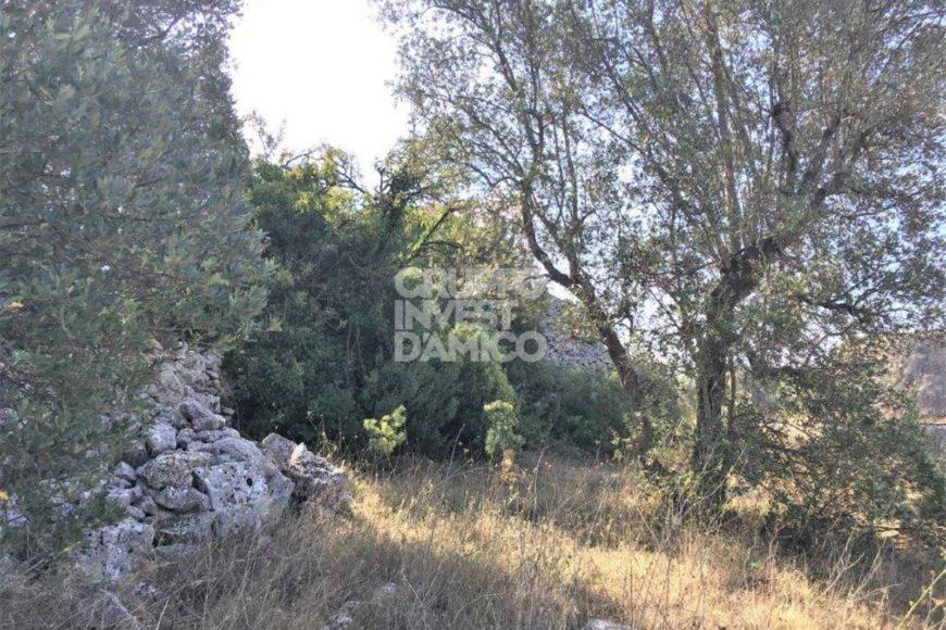 Vendita trulli e lamie rustici – Contrada Cervarolo, Ostuni (Brindisi)