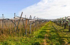 Vendita terreno – Contrada Paglia, Casamassima (Brindisi)