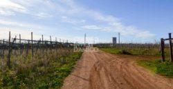 Vendita terreno – Contrada Paglia, Casamassima (Bari)