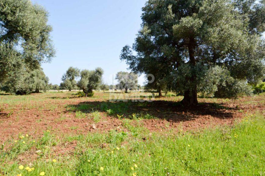 Vendita trulli e lamie rustici – Contrada Schiavone, Ostuni (Brindisi)