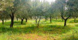 Vendita terreno – Contrada Fantese, Ostuni (Brindisi)