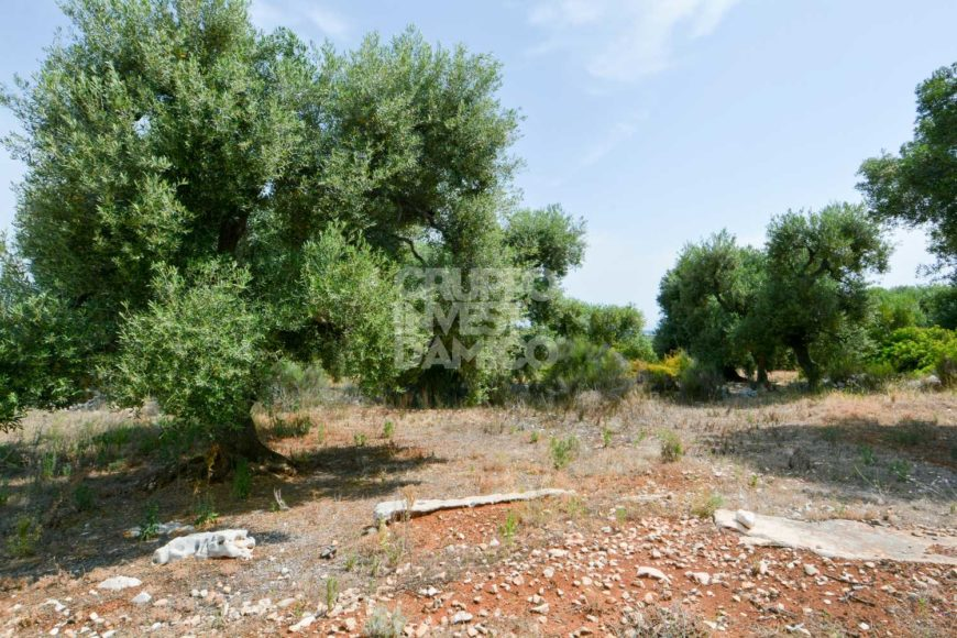 Vendita terreno – Contrada Monte Pizzuto, Fasano (Brindisi)