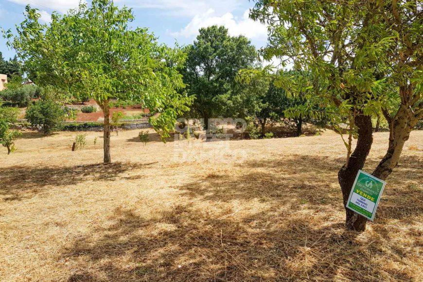 Vendita terreno – Contrada Abate Mauro, Cisternino (Brindisi)