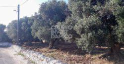Vendita terreno – Contrada Montalbano, Fasano (Brindisi)