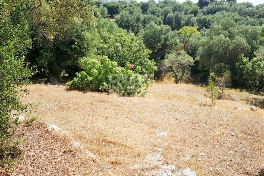 Vendita terreno – Contrada Pico, Cisternino (Brindisi)