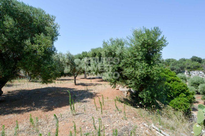 Vendita terreno – Contrada Tutosa, Ostuni (Brindisi)
