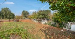 Habitable trulli for sale – Contrada Minetta, Cisternino (Brindisi)