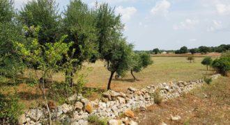 Vendita terreno – Contrada Carella, Ostuni (Brindisi)