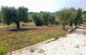 Vendita terreno – Contrada Restano, Cisternino (Brindisi)