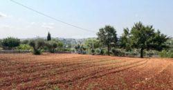 Vendita terreno – Contrada Ventura, Locorotondo (Bari)
