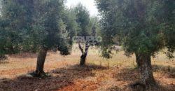 Vendita terreno – Contrada Difesa San Salvatore, Ostuni (Brindisi)