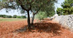 Vendita terreno – Contrada Pozzo Palomba, Cisternino (Brindisi)