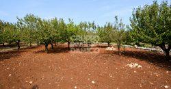 Vendita trulli e lamie rustici – C.da Nardelli/Abbasso le Foggie, Locorotondo (Bari)