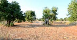 Vendita villa – Contrada Tutosa, Ostuni (Brindisi)