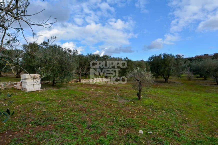 Vendita trulli e lamie rustici – Contrada San Galaro, Ostuni (Brindisi)