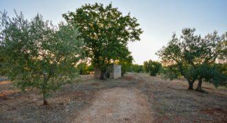 Vendita terreno – Contrada Settarte, Ostuni (Brindisi)