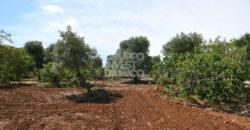 Vendita terreno – Contrada Ripidaroccia, Ostuni (Brindisi)