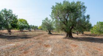 Vendita terreno –  Contrada Figazzano, Cisternino (Brindisi)