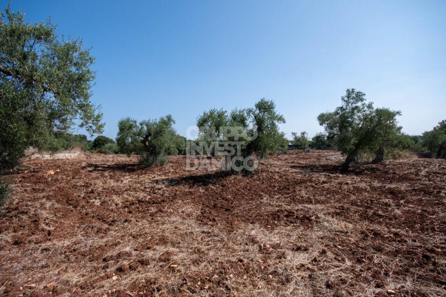 Vendita trulli e lamie rustici – Contrada Femminamorta, Cisternino (Brindisi)