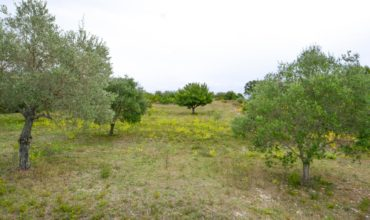 Vendita terreno – Contrada La Grotta, Martina Franca (Taranto)