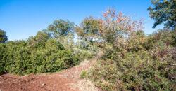 Vendita masseria – Contrada Fedele Grande, Ceglie Messapica (Brindisi)