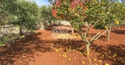 Vendita terreno – Circonvallazione Fasano – Alberobello, Locorotondo (Bari)