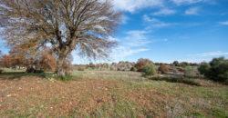 Vendita terreno – Contrada Rascina, Ostuni (Brindisi)