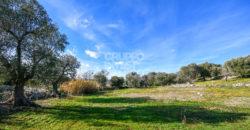 Vendita terreno, Contrada Cinera, Ostuni (Brindisi)