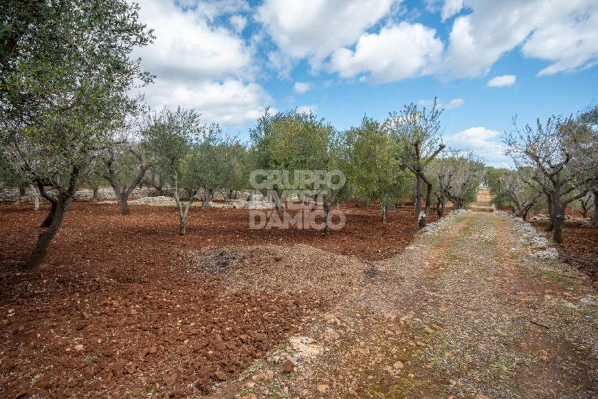 Vendita trulli e lamie rustici – Contrada Piatone, Ostuni (Brindisi)