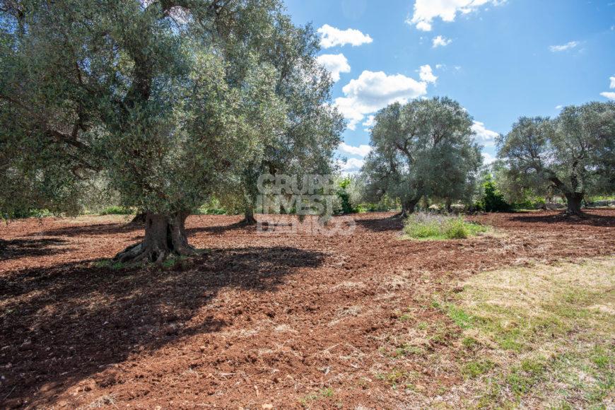 Vendita trulli e lamie rustici – Via/Contrada Angelo di Maglie, Ceglie Messapica (Brindisi)