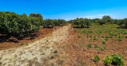 Vendita terreno – Contrada Calafetente, Torre Canne (Brindisi)