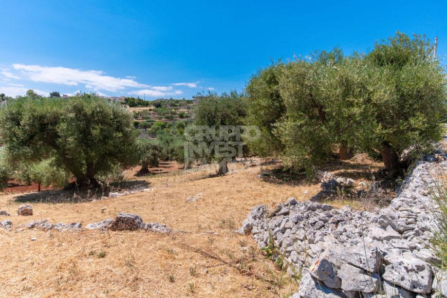 Vendita terreno – Contrada Terrabona, Cisternino (Brindisi)