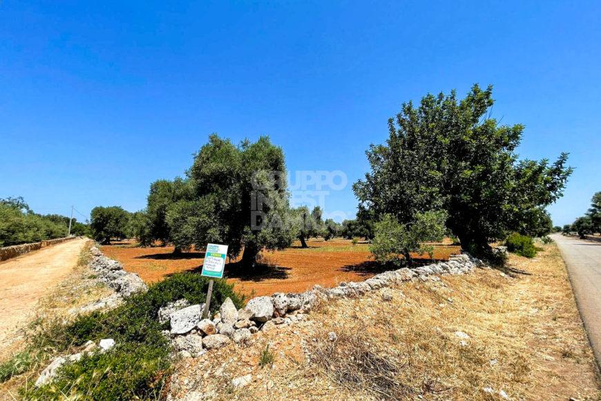Vendita trulli e lamie rustici – Contrada Lamasciola, Fasano (Brindisi)